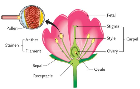 Flowers sexual reproduction fun facts